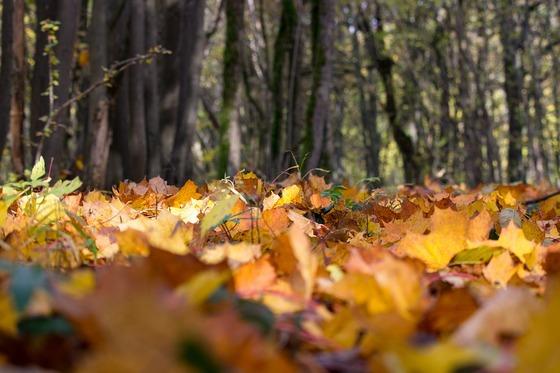 Podzimní běh